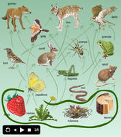 Food web by AmadeuBlasco