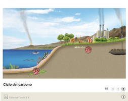Carbon cycle by AmadeuBlasco