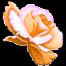 Flower 03 by hprune