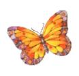 Butterfly 01 by hprune