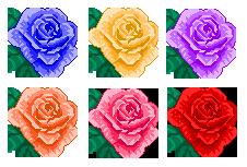 rose set 2 by hprune