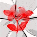 Flowers by Taishindo
