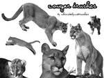 Cougar Brushes for Timebringer