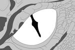 Dragon Eye Base