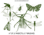 PHOTOSHOP BRUSHES : insects