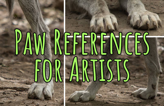 Paw References for Artists