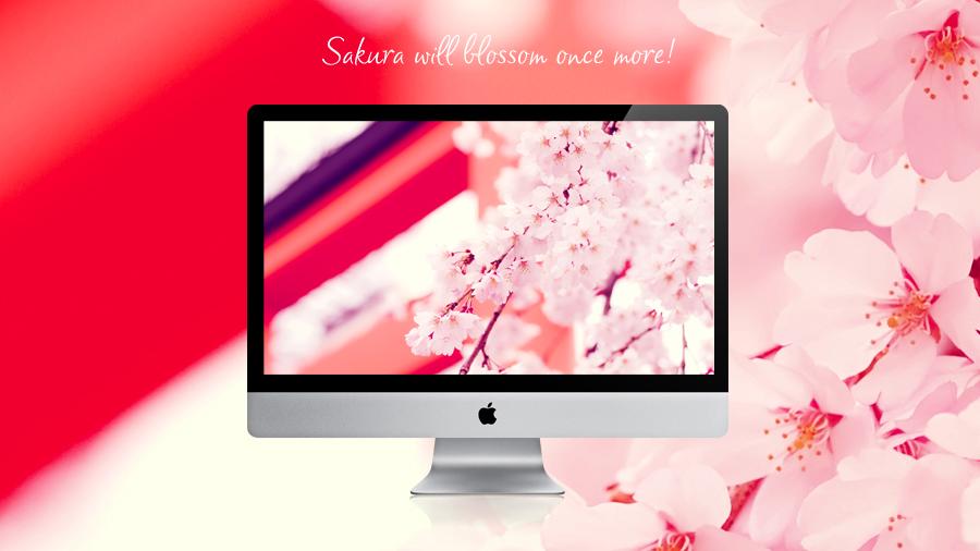 Sakura will blossom once more