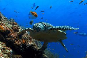 Turtle DreamScene for XDesktop
