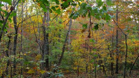 Trailside Color