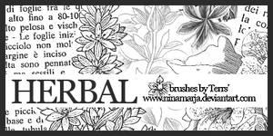 Herbal - brushes set 03