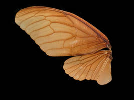 Animals wings