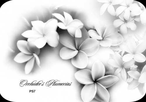 Orchidee's plumerias by orchidee