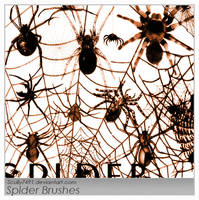 Spider by Scully7491