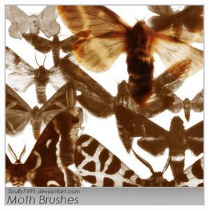 Moth Brushes