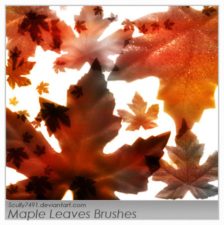 Maple Leaves Brushes by Scully7491