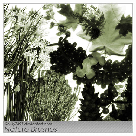 Nature Brushes by Scully7491