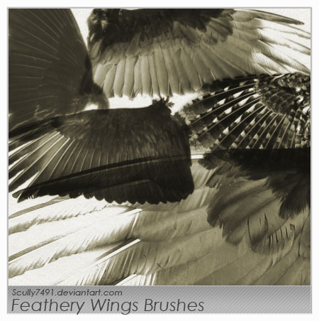 Feathery Wings Brushes