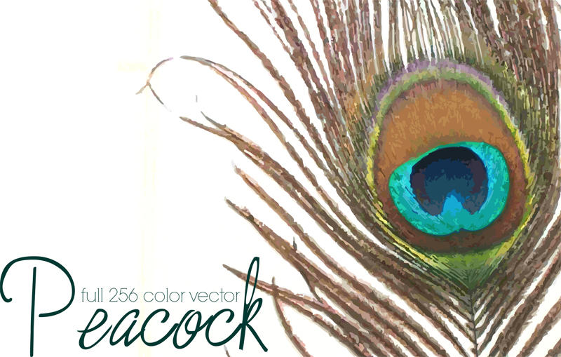 Peacock Feather Vector Graphic Peacock Feather Vector by