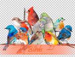 Birds PNGs