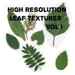High Resolution Leaf Textures