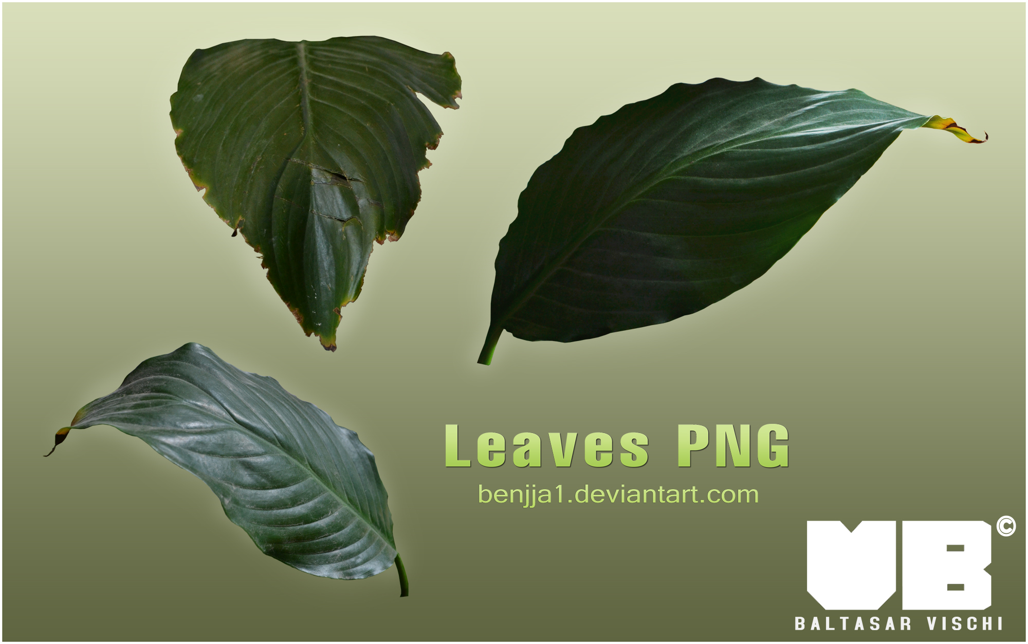 LEAVES PNG by Benjja1