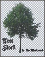 tree_brush_and_image by EveBlackwood
