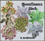cactus_greenflowers_stock