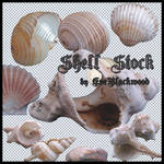 sea_shell_stock_pack