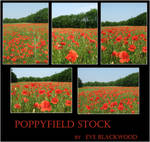 poppyfield backgrounds stock