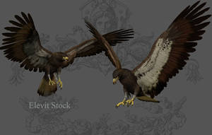 E-S Eagle by Elevit-Stock