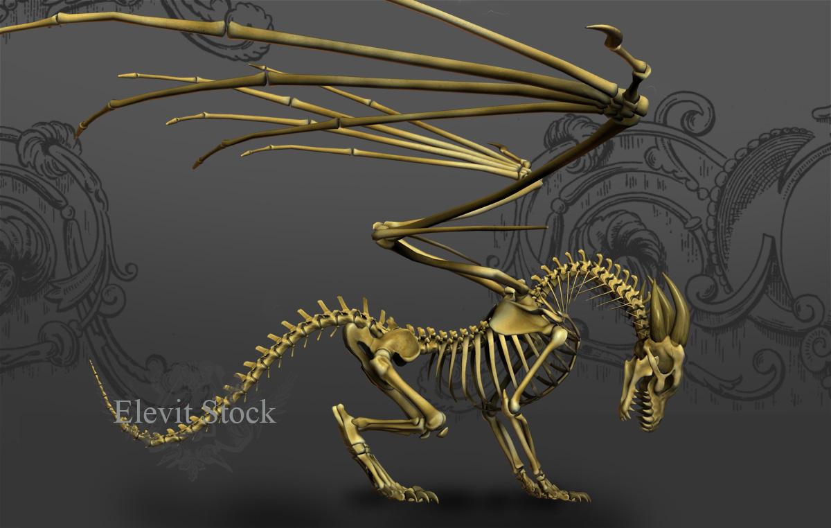E-S Bones by Elevit-Stock