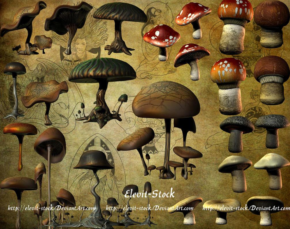 E-S Mushrooms by Elevit-Stock