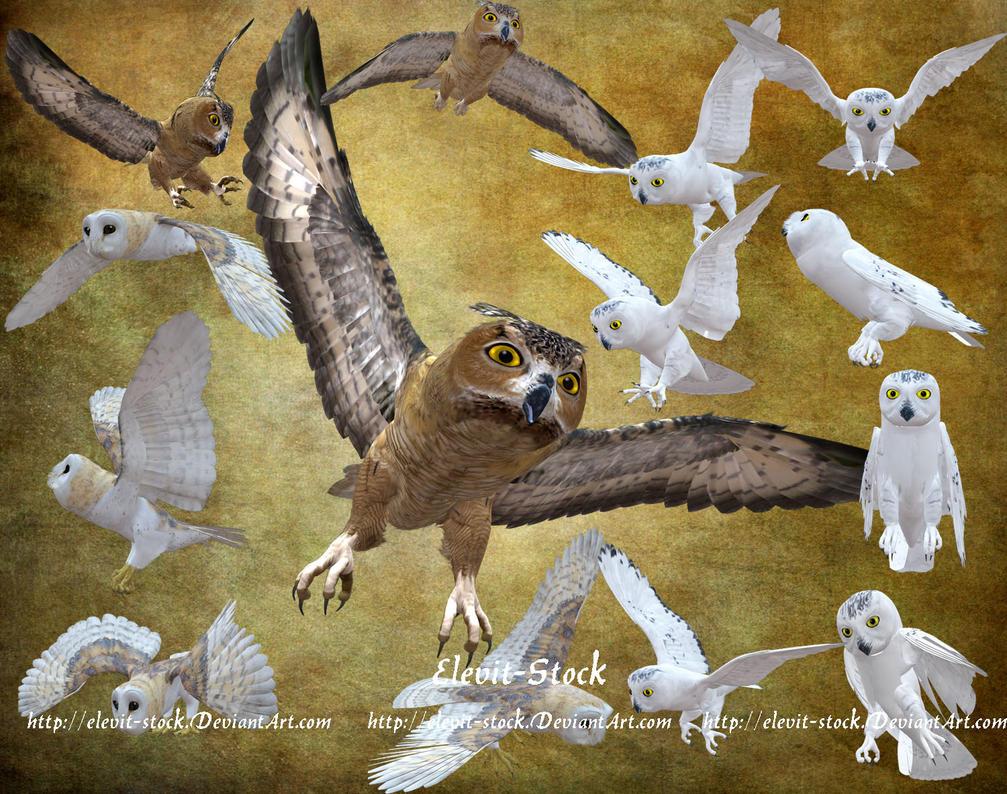 E-S Owl by Elevit-Stock