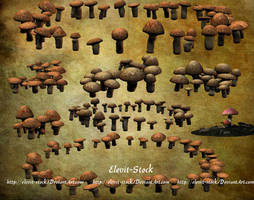 E-S Mushrooms II Fairy Rings by Elevit-Stock