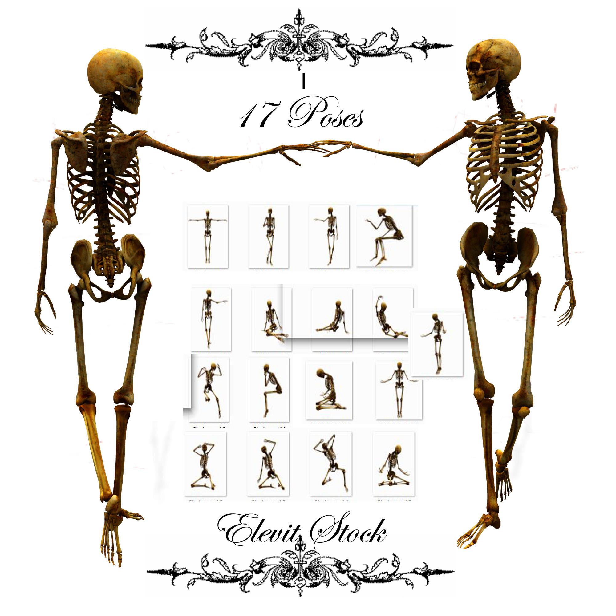 E-S Bones I by Elevit-Stock