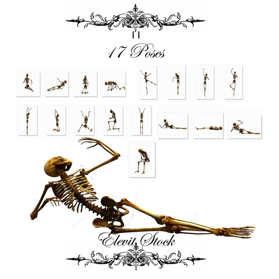 E-S Bones II by Elevit-Stock