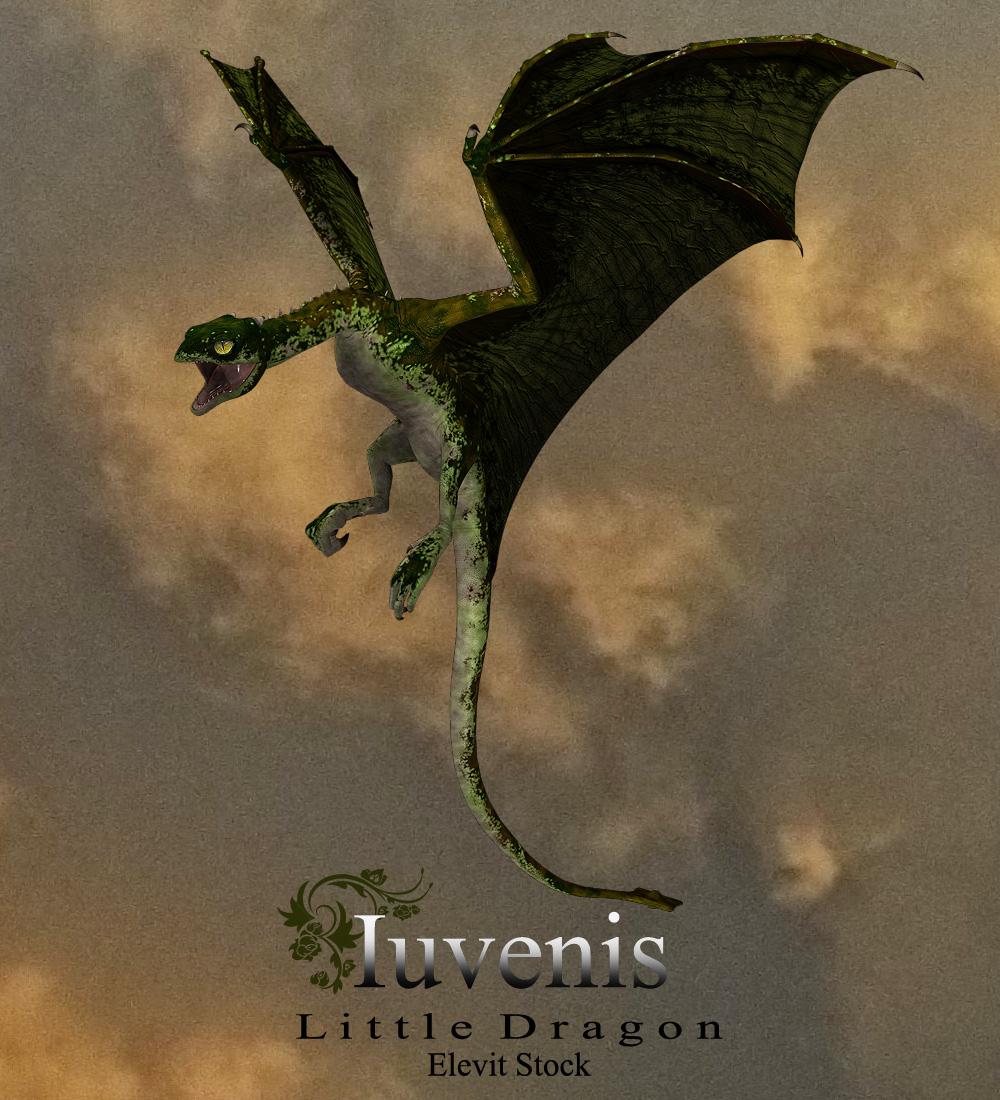 E-S Iuvenis Dragon