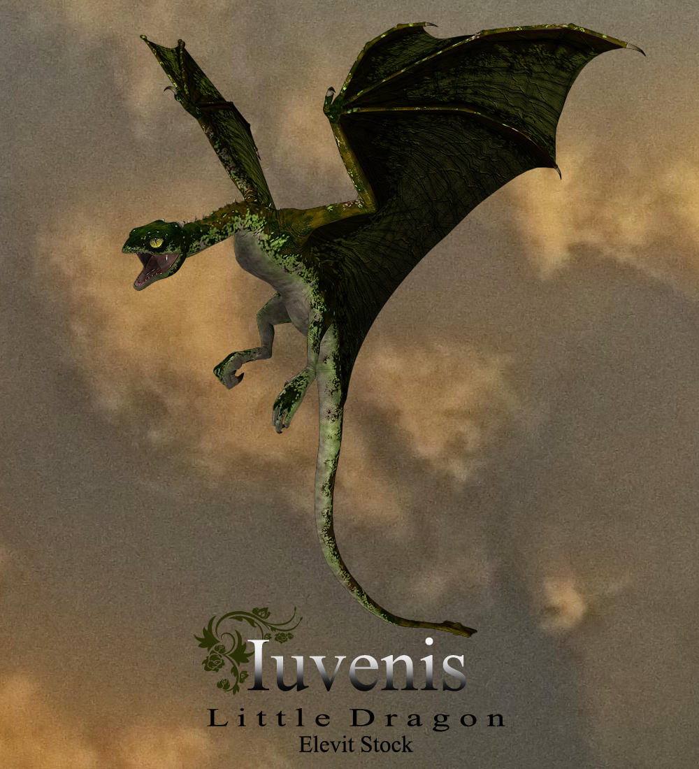 E-S Iuvenis Dragon by Elevit-Stock