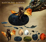 E-S Hatchling and eggs