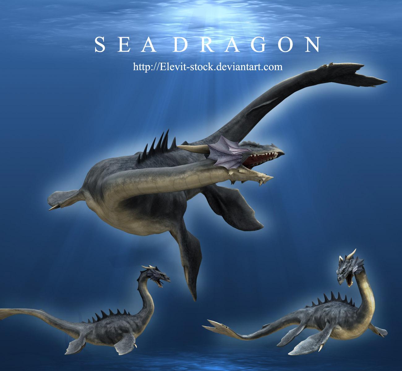 Sea Dragon by Elevit-Stock