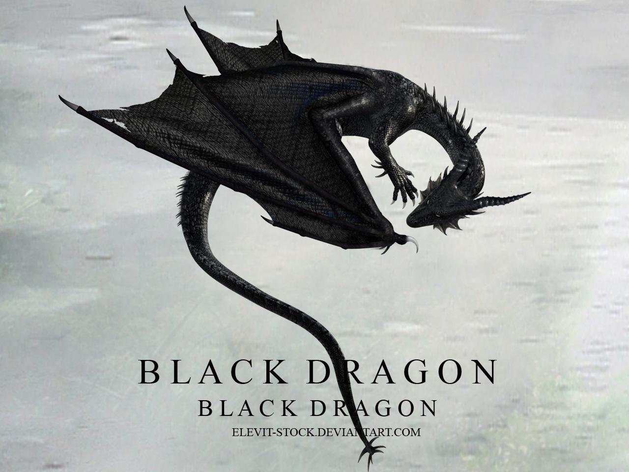 E S Black dragon