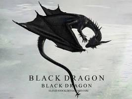 E S Black dragon by Elevit-Stock
