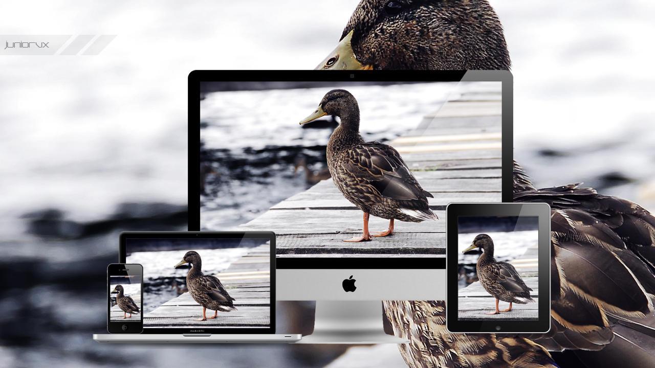 Duck Wallpaper by JuniorvX