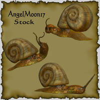 Snail Stock by AngelMoon17