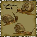 Snail Stock