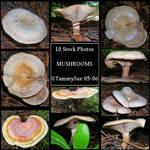 Mushrooms by TammySue