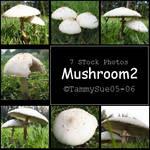 Mushroom2 by TammySue