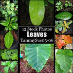 Leaves by TammySue