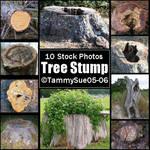 Tree Stumps by TammySue