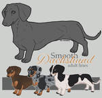 Smooth Dachshund Adult Lines